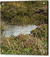 Small Pond Acrylic Print