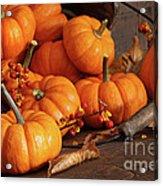 Small Pumpkins With Wood Bucket  Acrylic Print by Sandra Cunningham
