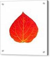 Small Red Aspen Leaf 1 - Print Version Acrylic Print