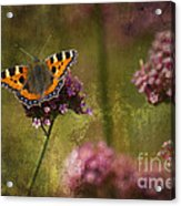 Small Tortoiseshell Butterfly Acrylic Print