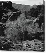 Small Tree Acrylic Print