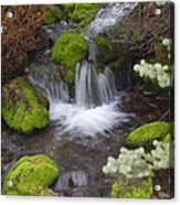 Small Waterfalls Acrylic Print by Yvette Pichette