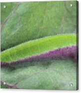 Small White Butterfly Caterpillar Acrylic Print