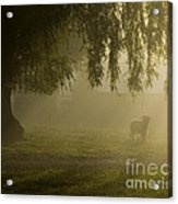 Smelly Goat In The Mist Acrylic Print