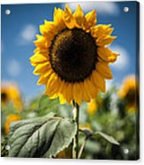 Smile Sunflower Acrylic Print by Jason Bartimus