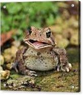 Happy Toad Acrylic Print