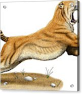 Smilodon Saber-toothed Tiger Acrylic Print