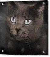 Smokey Cat Acrylic Print