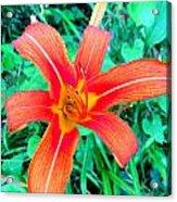 Smokie Mountian Wild Flower Acrylic Print