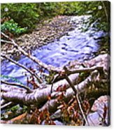 Smoky Mountain Stream Two Acrylic Print