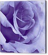 Smoky Purple Rose Flower Acrylic Print