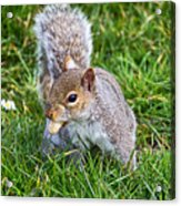 Snack Time For Squirrels Acrylic Print