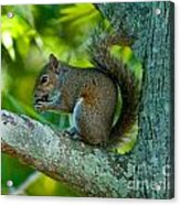 Snacking Squirrel Acrylic Print