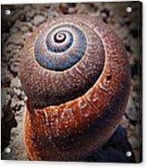 Snail Beauty Acrylic Print
