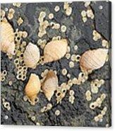Snail Family Vacation Acrylic Print
