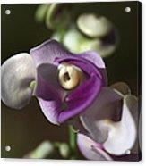 Snail Flower In The Spot Light Acrylic Print