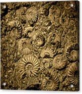 Snail Fossil Acrylic Print