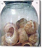 Snail Motel Acrylic Print