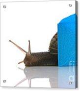 Snail Next To Miniature Mail Envelope Acrylic Print