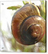 Snail Watercolor - Digital Painting Effect Acrylic Print