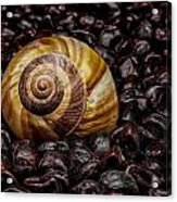 Snailshell In Tamarind Bed Acrylic Print