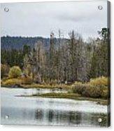 Snake River Near Cattleman's Bridge Site -  Grand Tetons Acrylic Print