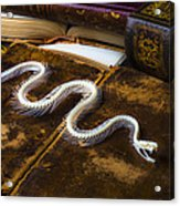 Snake Skeleton And Old Books Acrylic Print