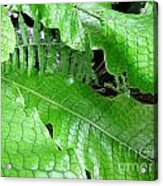 Snake Skin Plant Acrylic Print