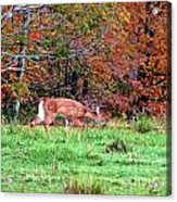 Sneaking Out Acrylic Print