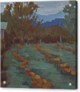 Snohomish Pumpkin Patch Acrylic Print