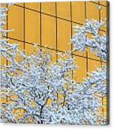 Snow And Golden Glass Acrylic Print