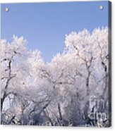 Snow And Ice Blanket Cottonwood Trees Acrylic Print