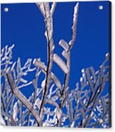 Snow And Ice Coated Branches Acrylic Print