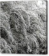 Snow And Ice Covered Trees At The Base Of Niagara Falls Acrylic Print