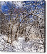 Snow Arches Acrylic Print