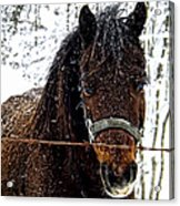 Snow Beauty Acrylic Print