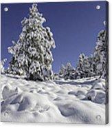 Snow Bomb Acrylic Print by Tom Wilbert