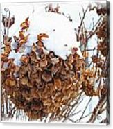 Snow Bonnet Acrylic Print