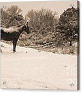 Snow Bound Horse Acrylic Print
