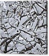 Snow Branches 2-1-15 Acrylic Print