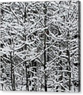Snow Branches Acrylic Print