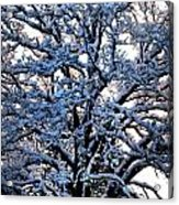 Snow Bright Acrylic Print