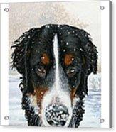 Snow Bumper Acrylic Print