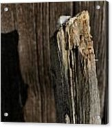 Snow Capped Fence Post Acrylic Print