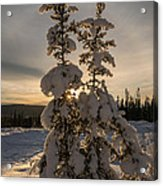 Snow Capped Sitka Spruce Acrylic Print