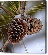 Snow Cones Acrylic Print