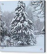 Snow Conifer 2-1-15 Acrylic Print
