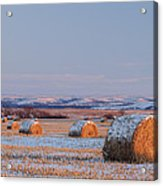 Snow Covered Bales Acrylic Print by Scott Bean