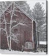 Snow Covered Birch Tree And A Red Barn. Acrylic Print