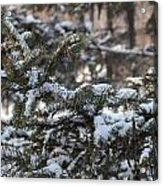 Snow Covered Branches Acrylic Print by Brett Geyer